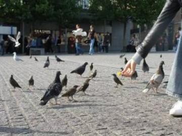 园林广场青石板石材地面铺装样式图片